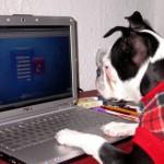 Немного про киберзависимость,  киберпрозрачность и кибервнушаемость