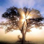 Шесть нестандартных советов как улучшить жизнь