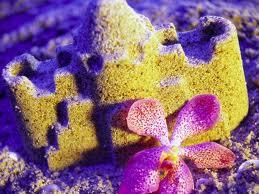 цветы на песке. Сказка