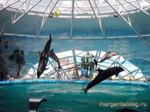 отдых в дельфинарии