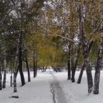 Белый снег и желтые листья. Картинки осени