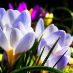 cvety-vesny