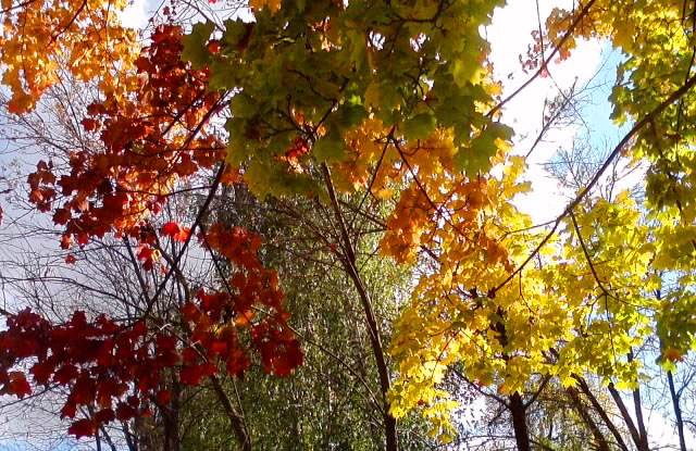 Три цвета осени