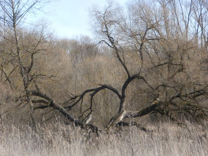 дерево, красивое дерево, фото дерева
