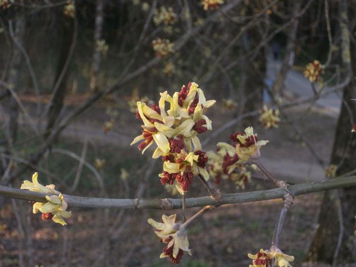 деревья весной, распускаются деревья, цветут деревья
